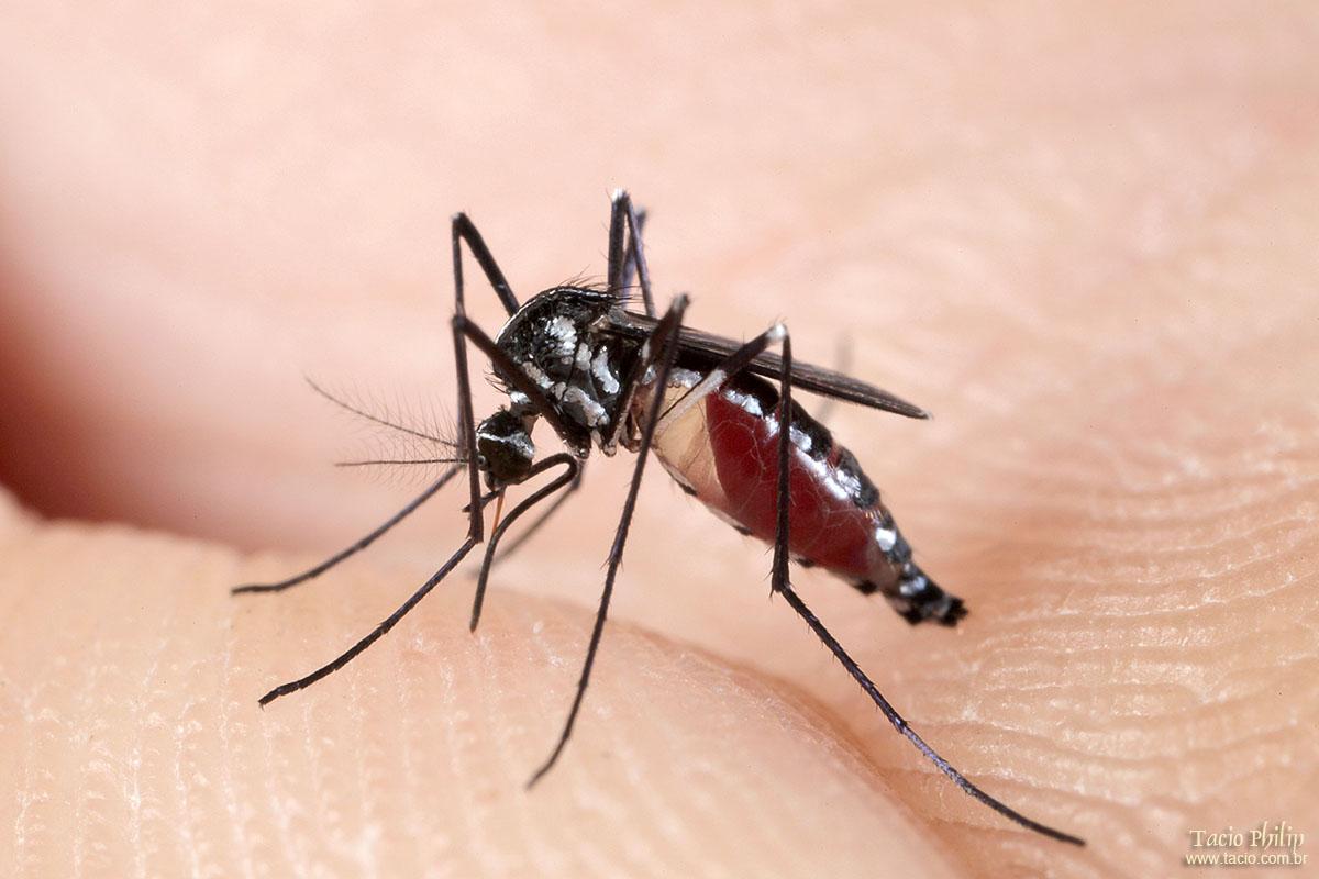Dedetizadora Curitiba – Dicas para se livrar de Mosquitos e Pernilongos